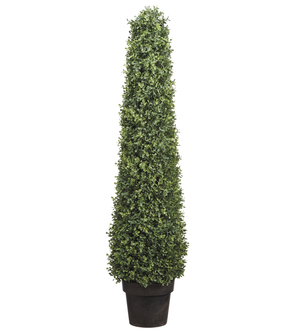 Boxwood Cone Topiary in Plastic Pot 46\u0027\u0027
