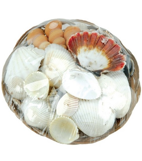 Sea Shells W/Basket