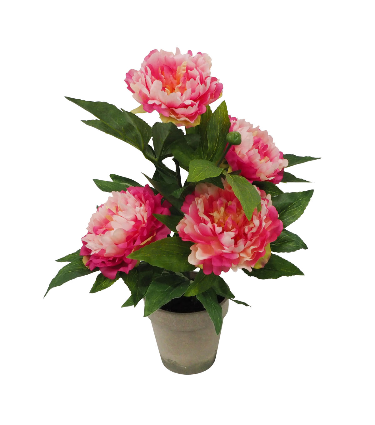Fresh Picked Spring 19\u0027\u0027 Potted Peony Arrangement-Pink