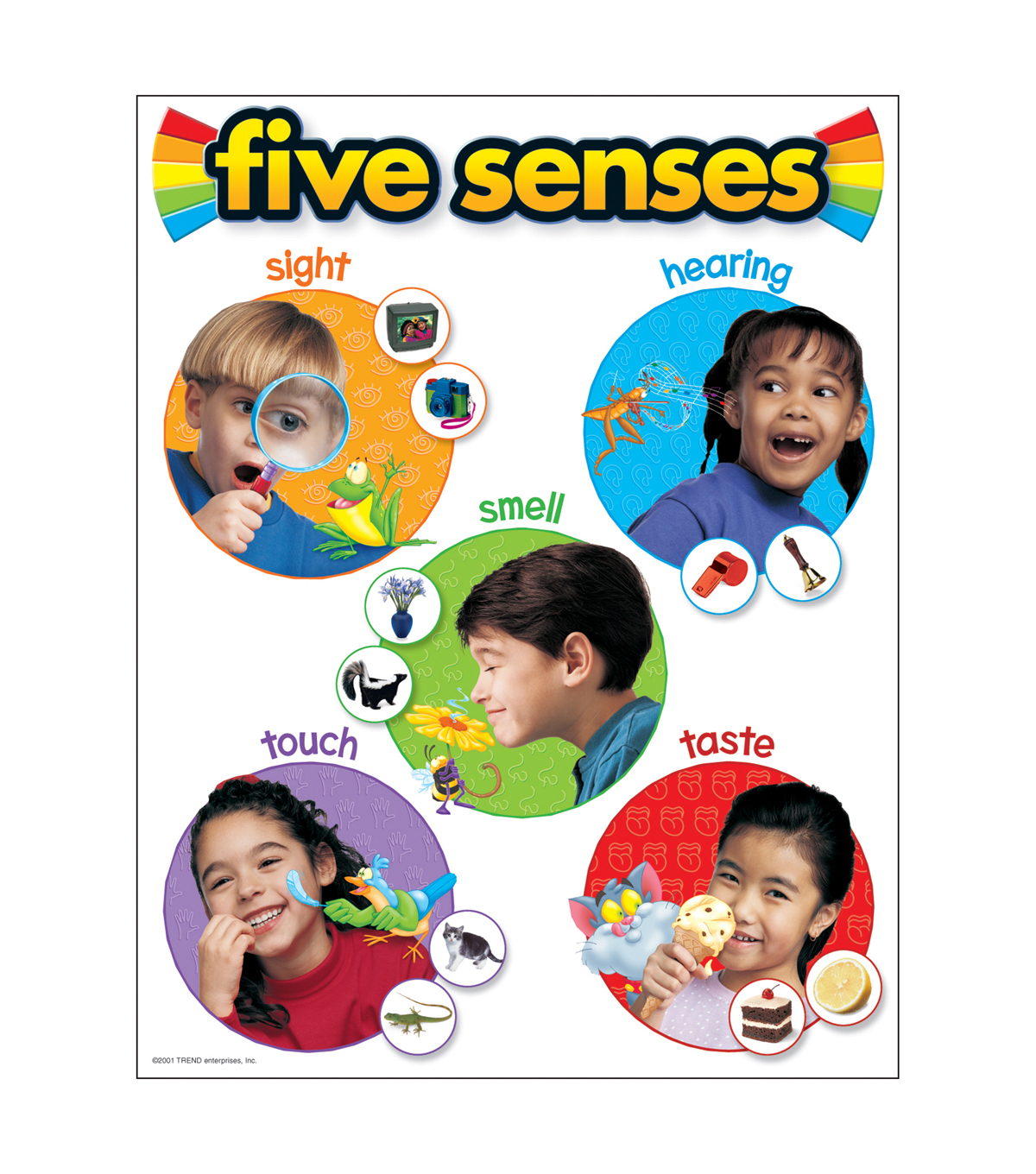 Five Senses Learning Chart 17\u0022x22\u0022 6pk