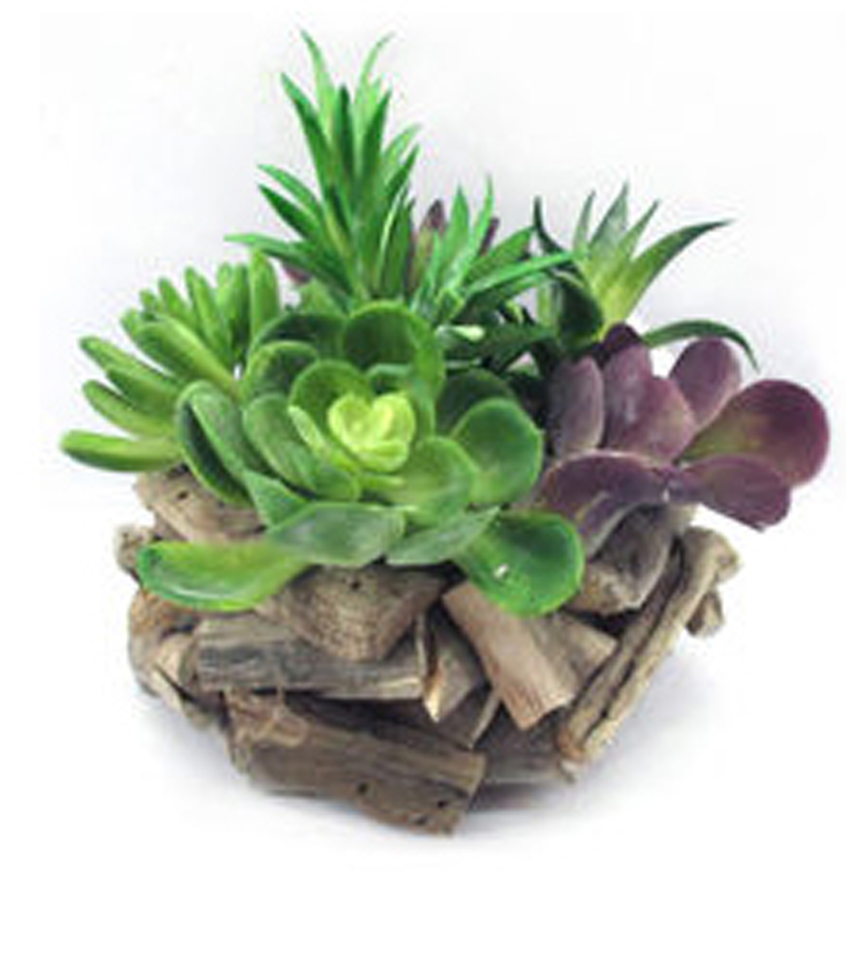 Bloom Room Succulent Arrangement