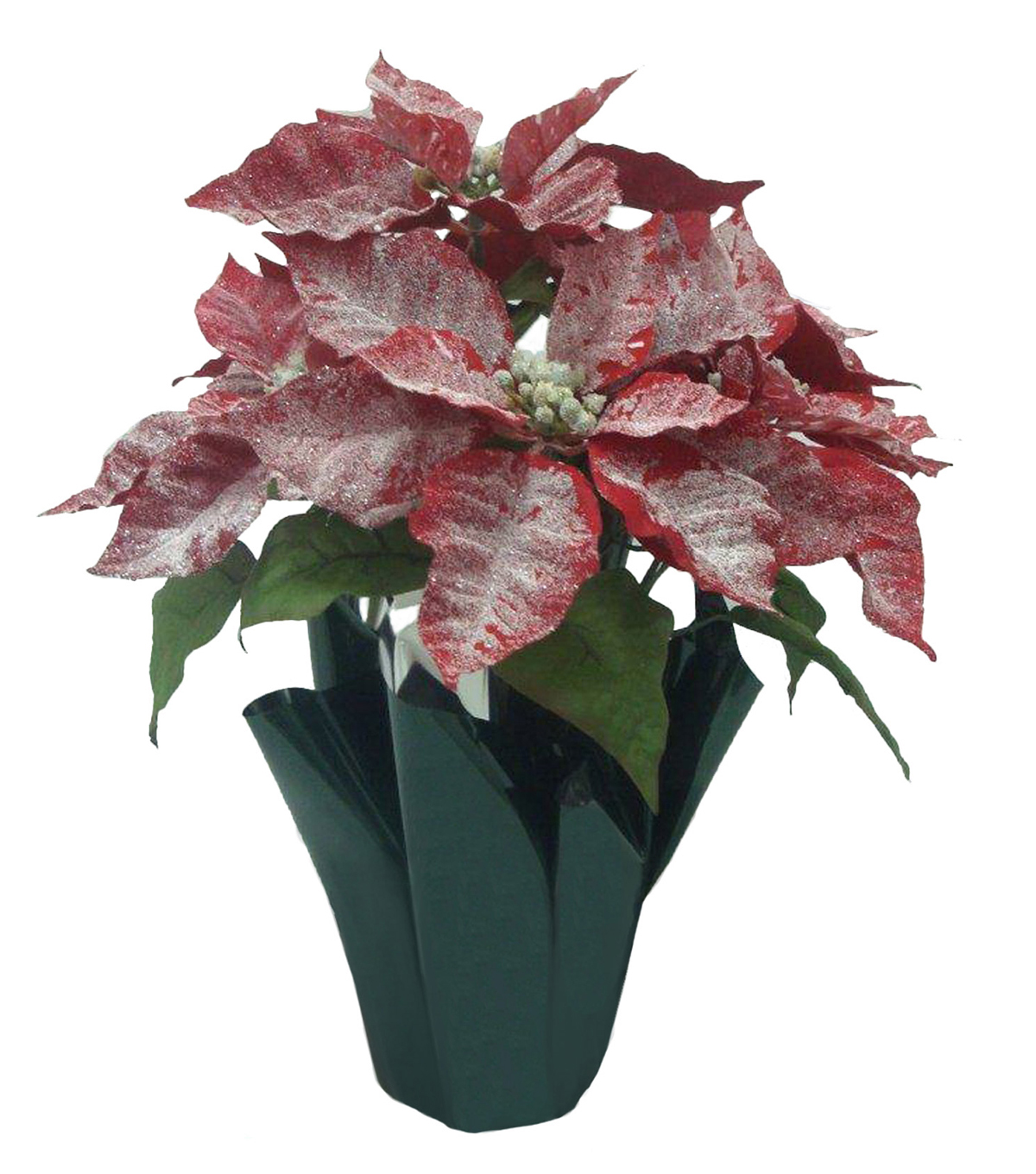 Blooming Holiday Christmas Frosted Potted Poinsettia-Red