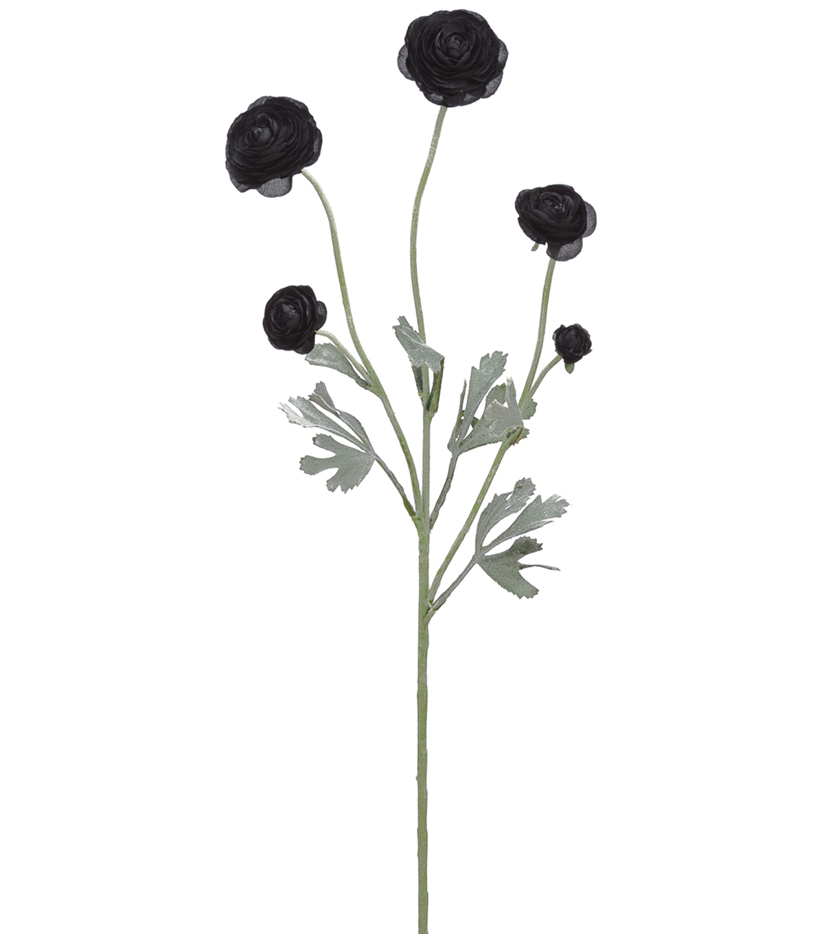 Bloom Room 28\u0027\u0027 Ranunculus Spray-Black