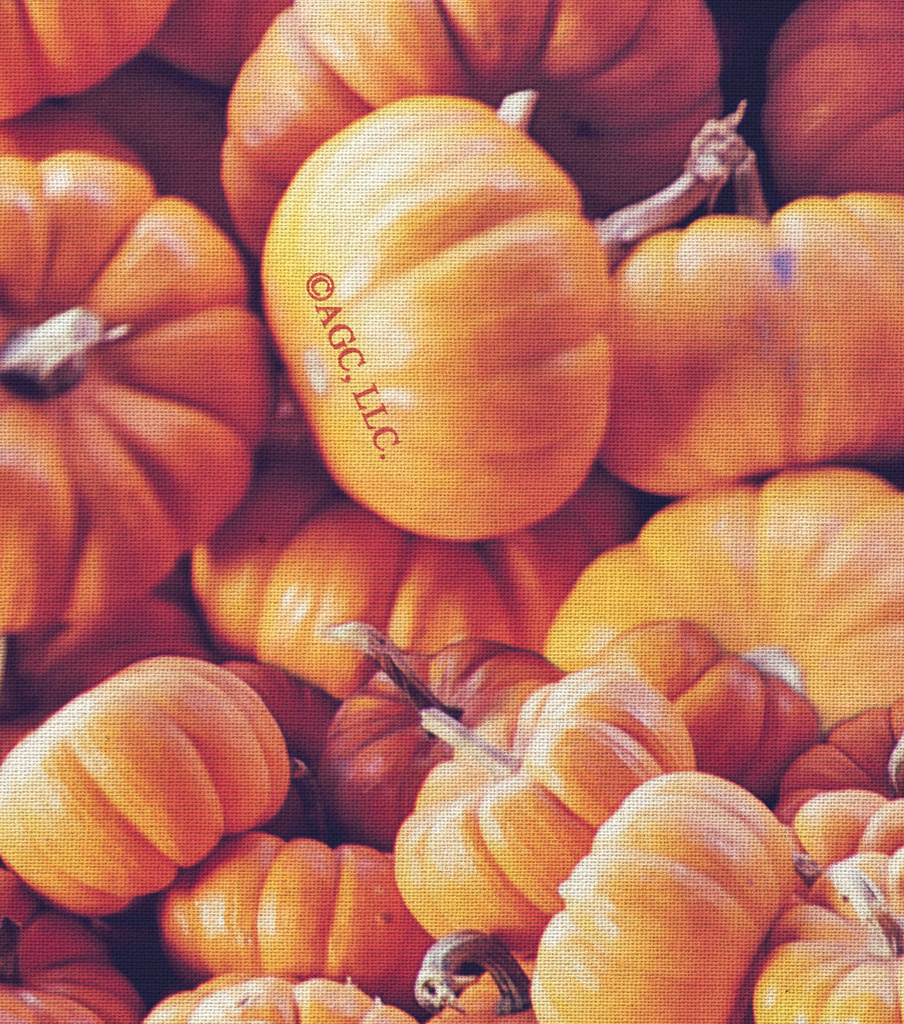 Harvest Cotton Fabric -Packed Pumpkins