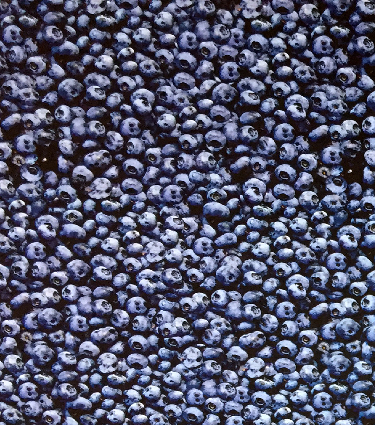 Novelty Cotton Photo Real Fabric -Blueberries