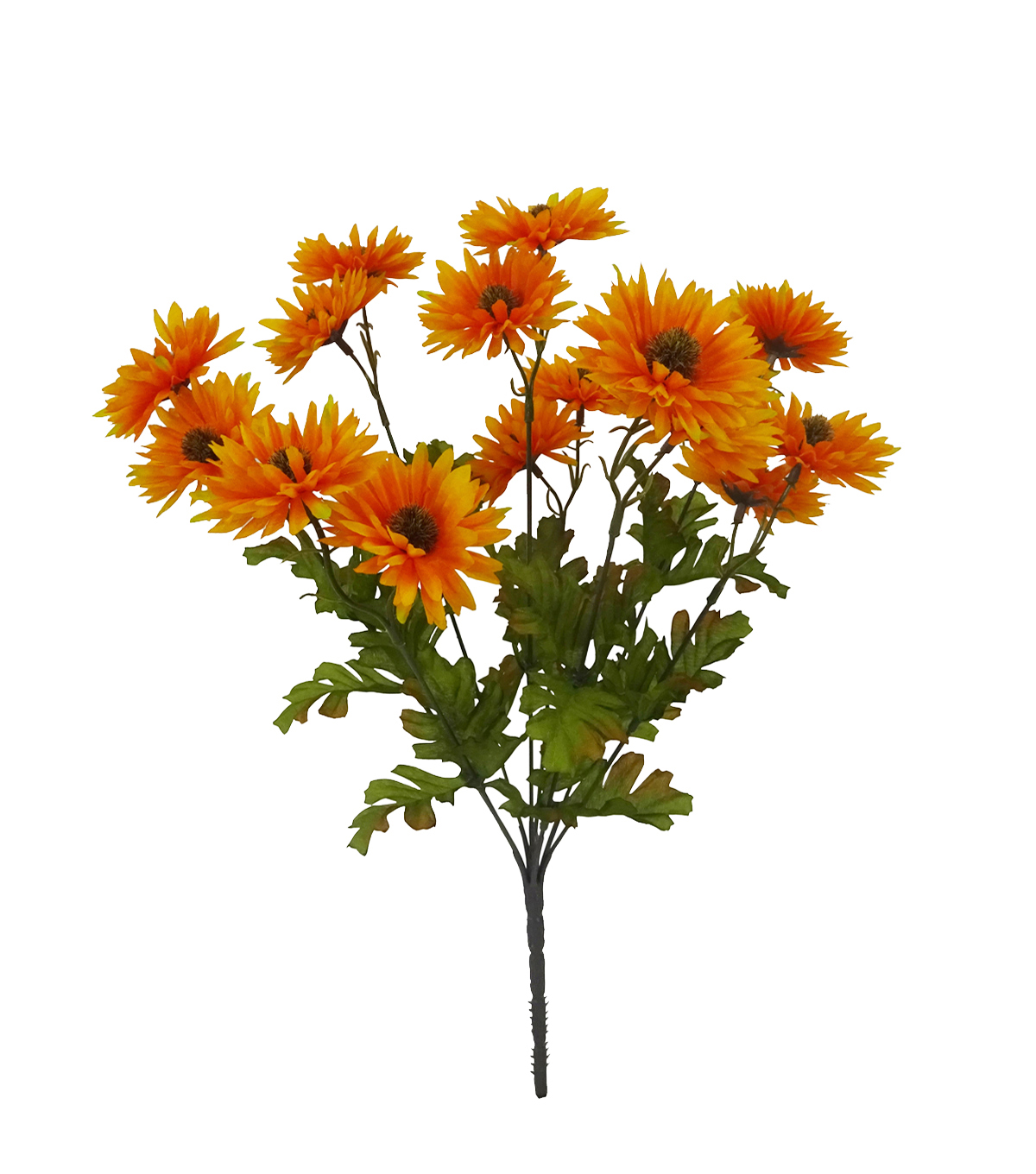 Blooming Autumn Daisy Bush-Orange