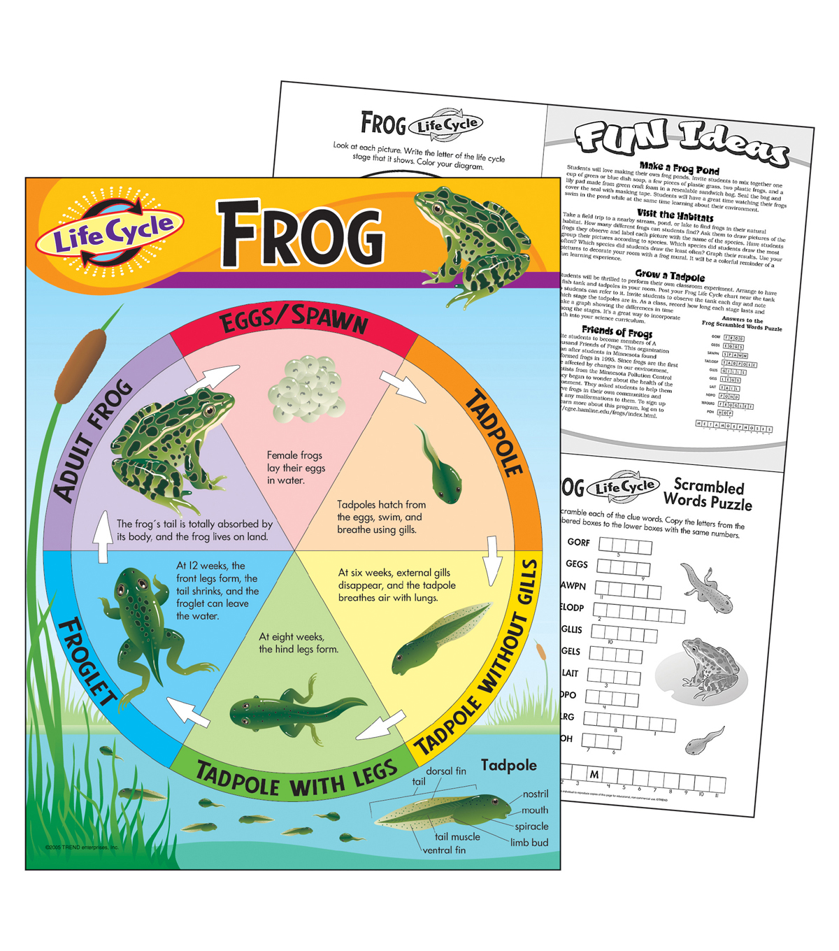 Life Cycle of a Frog Learning Chart 17\u0022x22\u0022 6pk