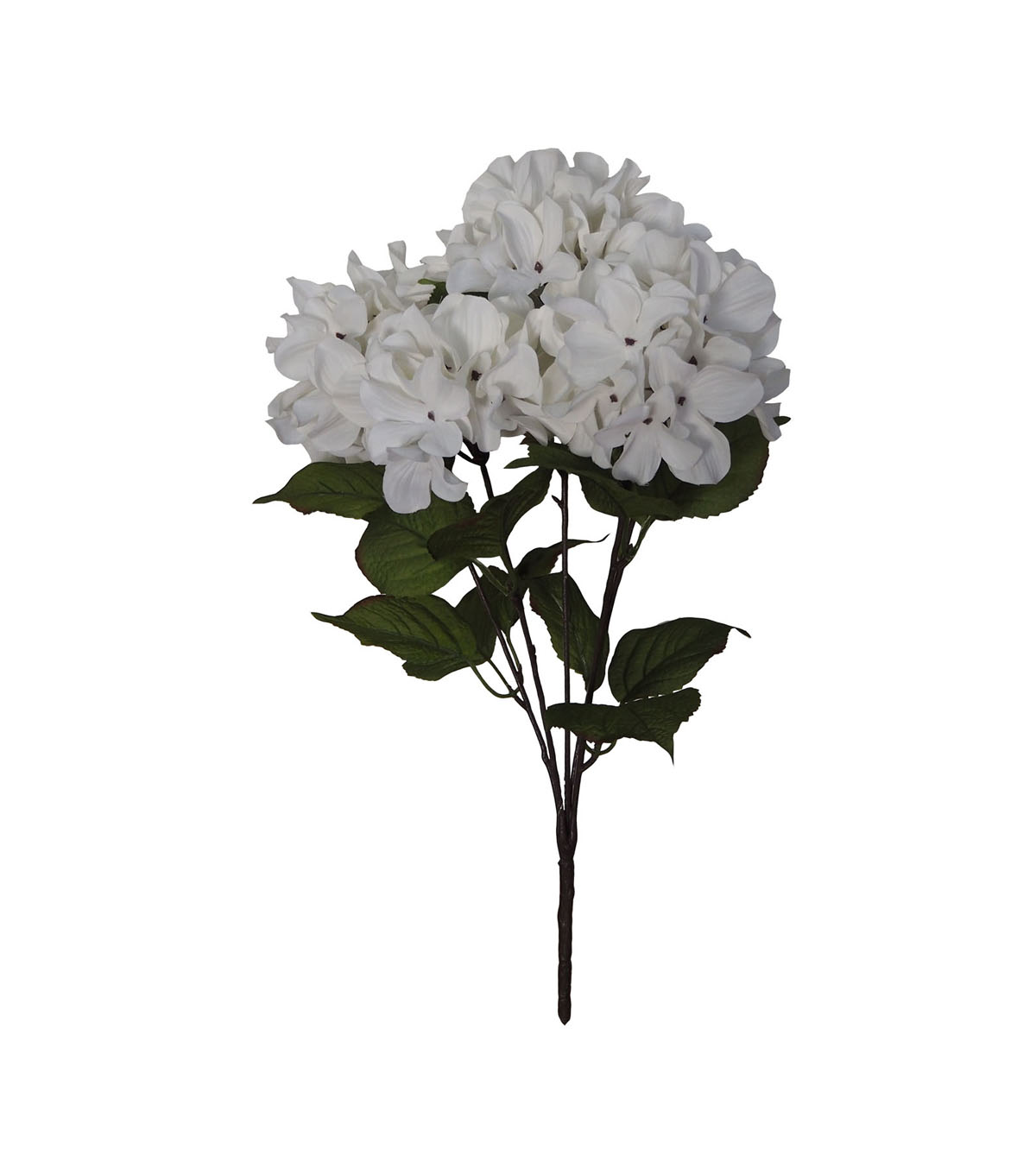 Blooming Autumn Hydrangea Bush-White