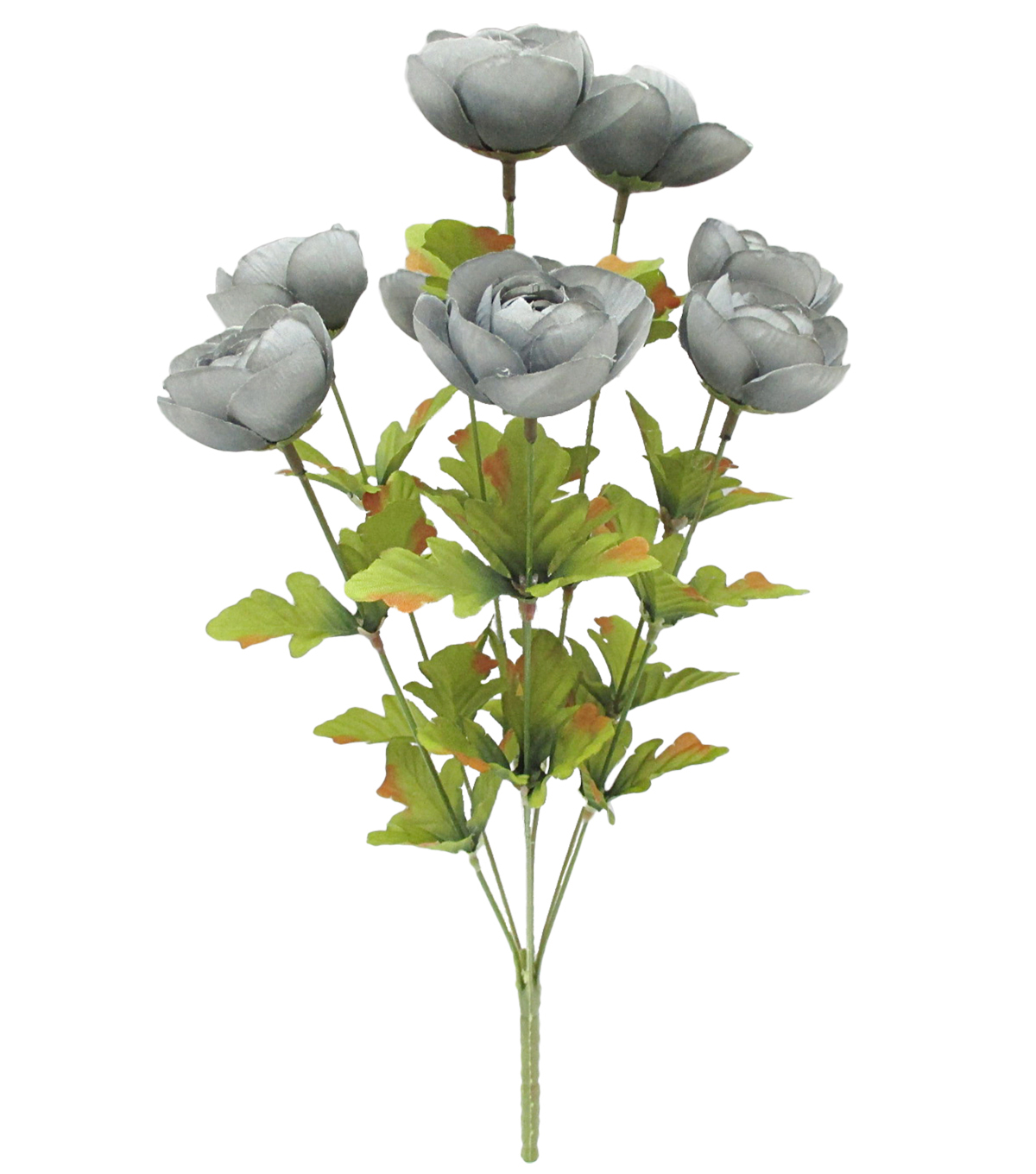 Blooming Autumn 18\u0027\u0027 Ranunculus Bush-Gray