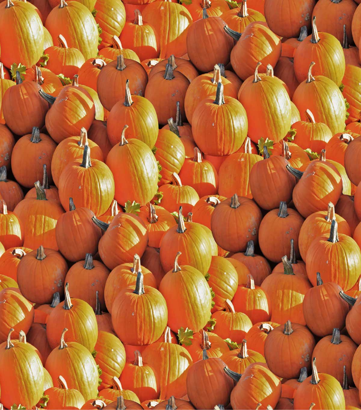 Harvest Cotton Fabric 44\u0022-Pumpkins