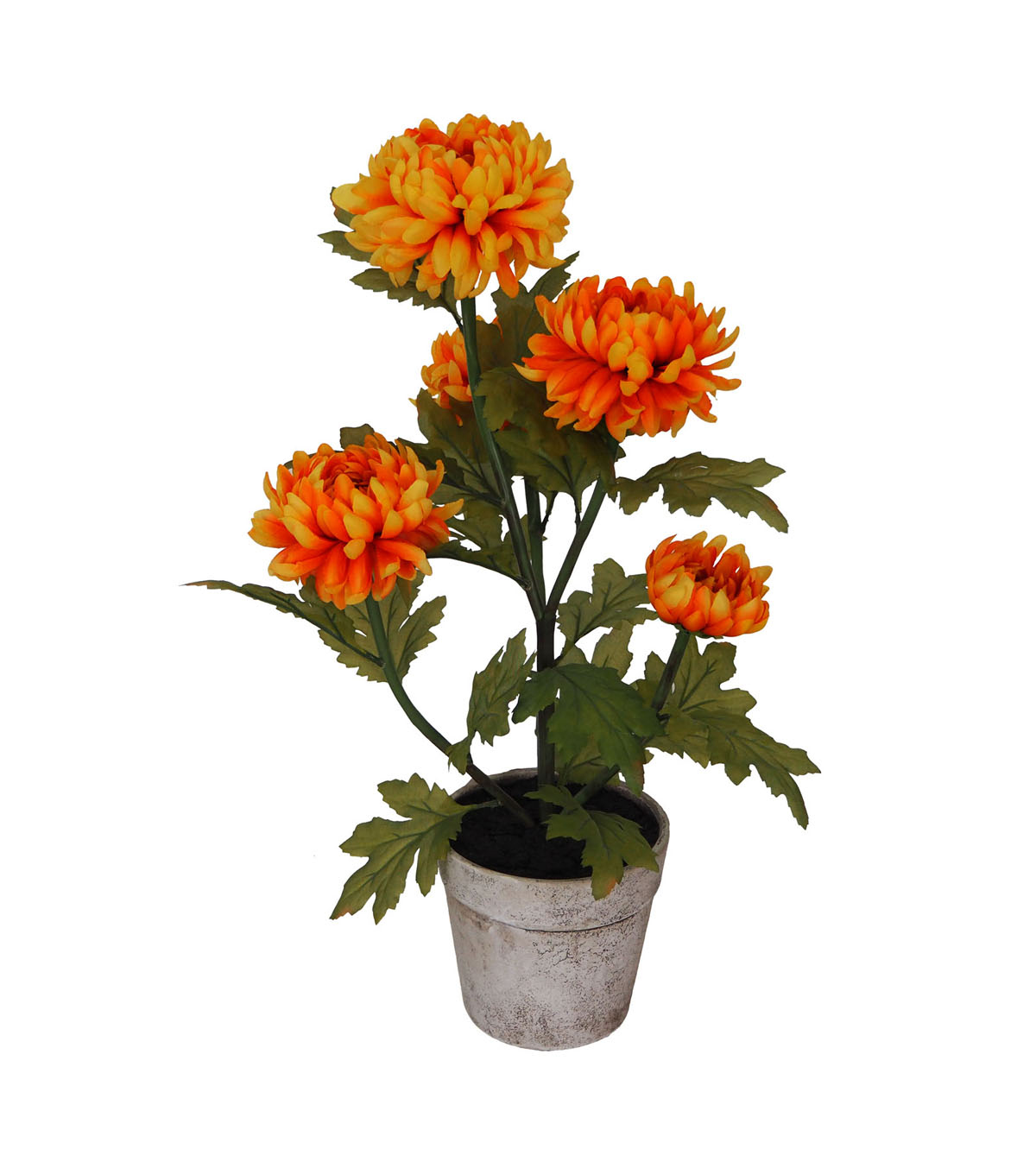 Blooming Autumn Mum in Paper Pot-Yellow