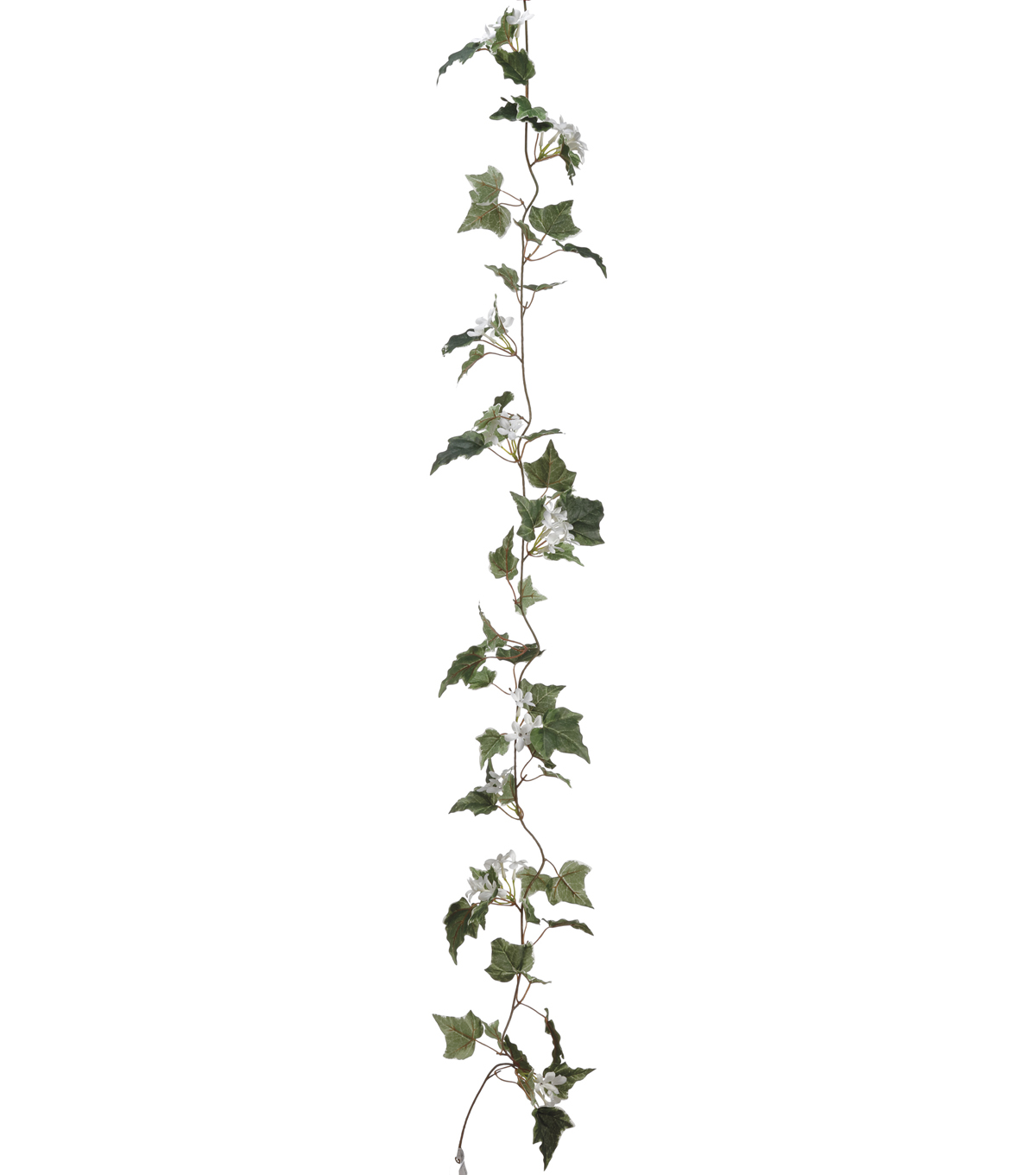 Bloom Room 6\u0027 Stephanotis with Ivy Leaf Garland